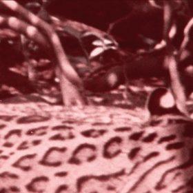 Adelante la selva